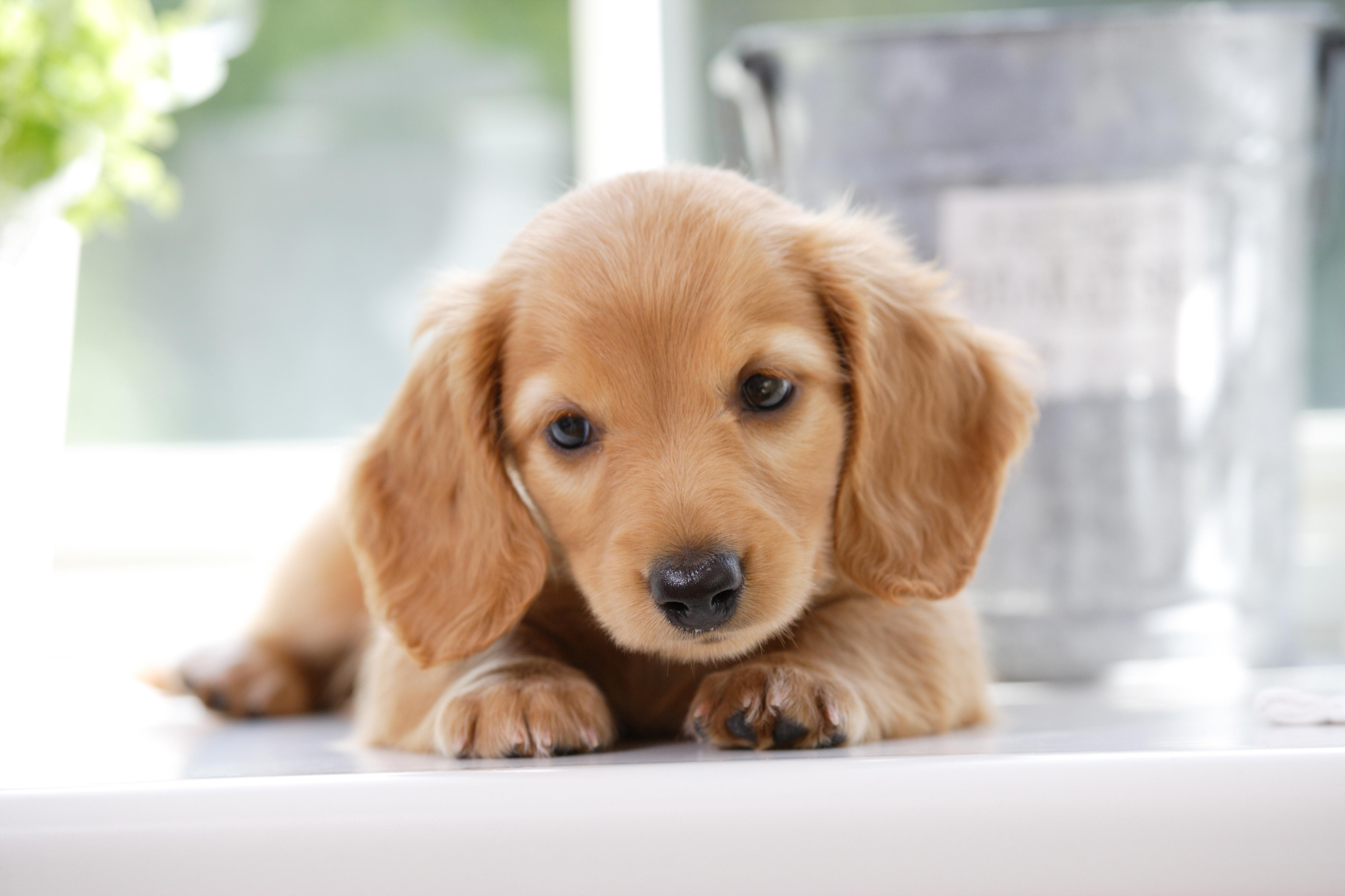 気の強い犬と気の弱い犬の性格はどこで決まるの?