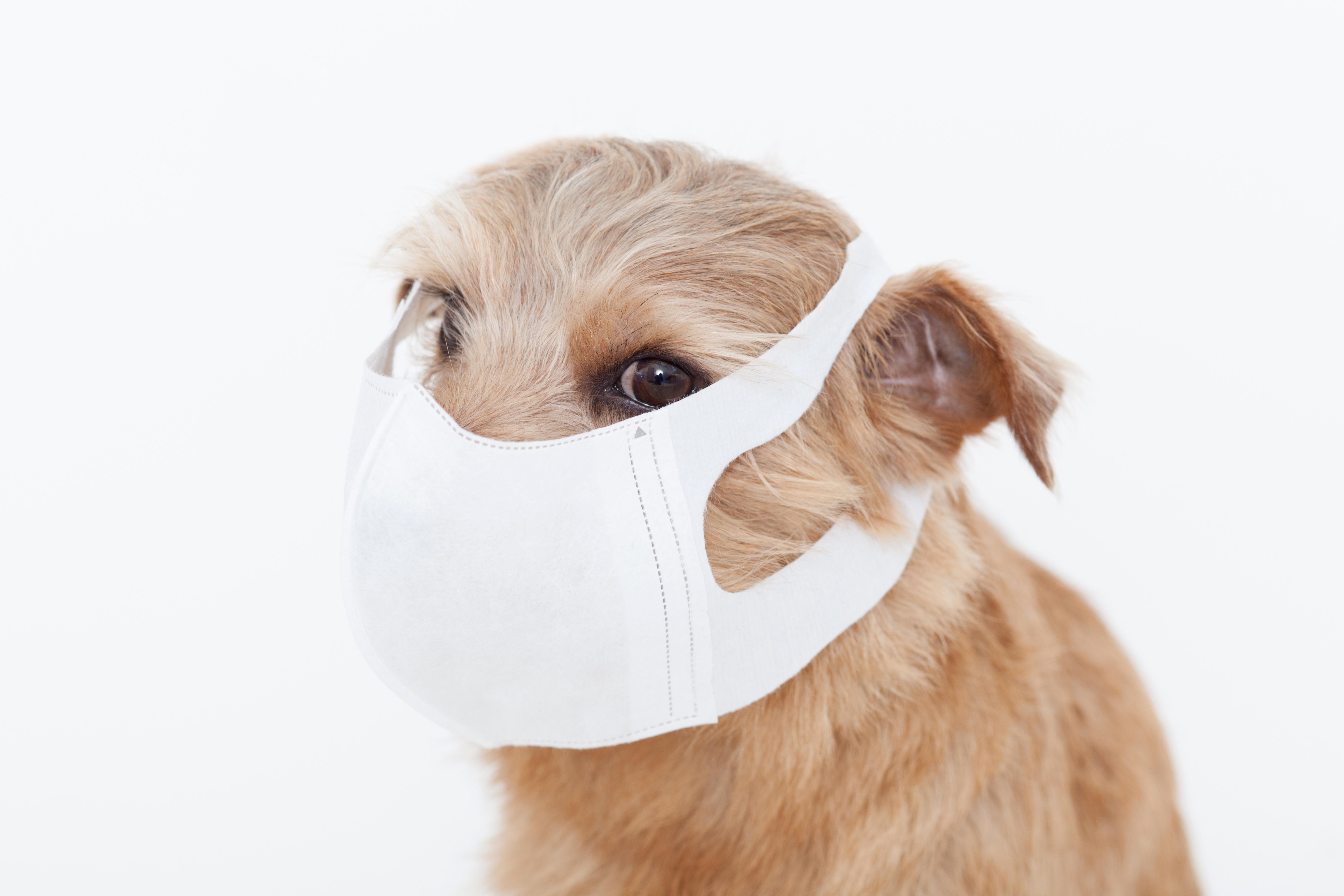 愛犬が花粉症になってしまった!自宅でできる6つの対処方法とは