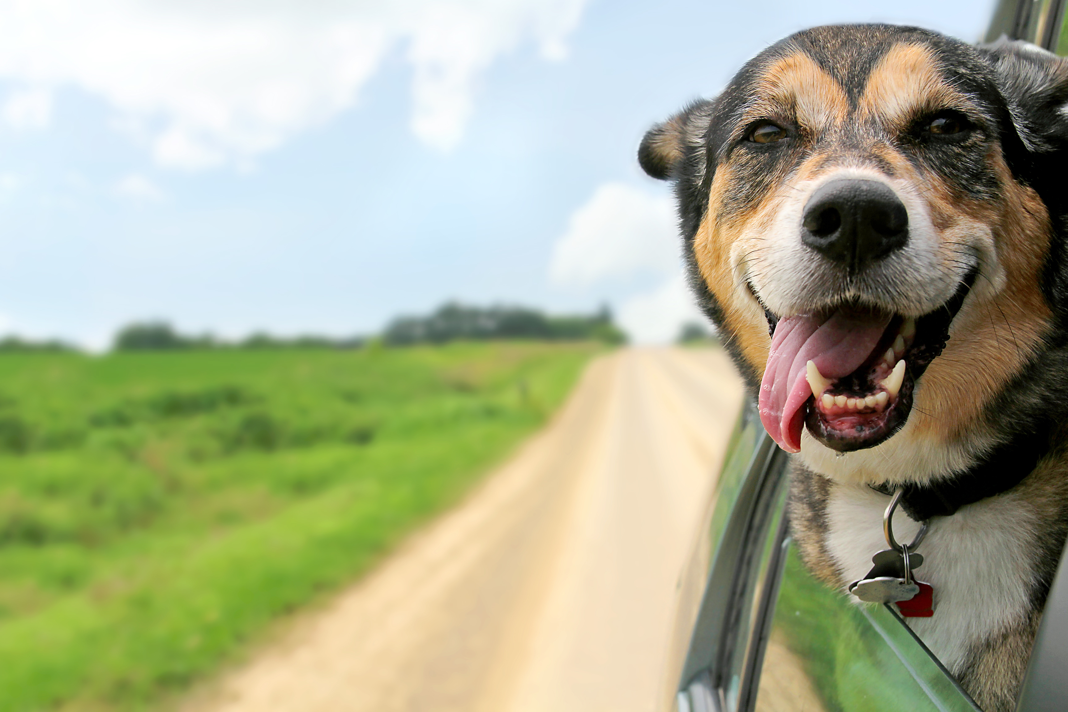 東海のドッグランがある道の駅7選!旅の疲れを愛犬と癒そう♪
