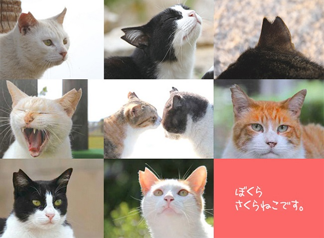 3月22日は「さくらねこ」の日。私たちが地域猫にしてあげられることを考える