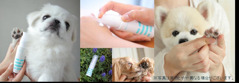 貴方のオーガニックは、本当のオーガニック?獣医師監修のもとで開発した「ドックドッグ 肉球クリーム」が、肉球ケア用品として日本で初の国際オーガニック認定エコサートを取得