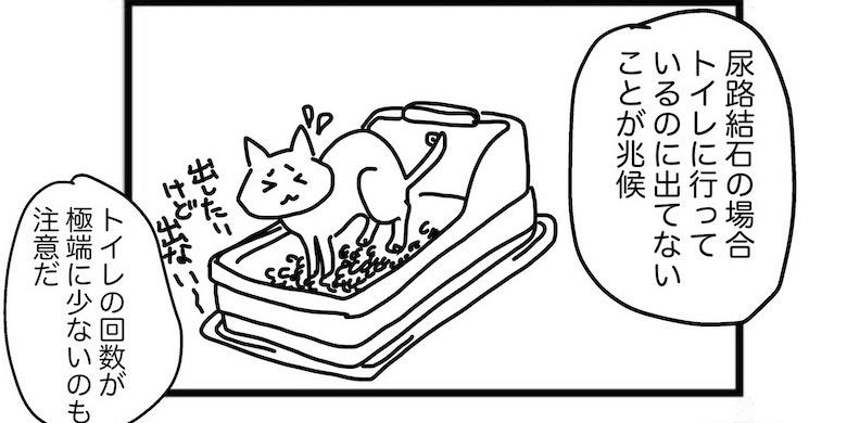 猫の尿路結石はトイレに行っているのに出てないことが兆候