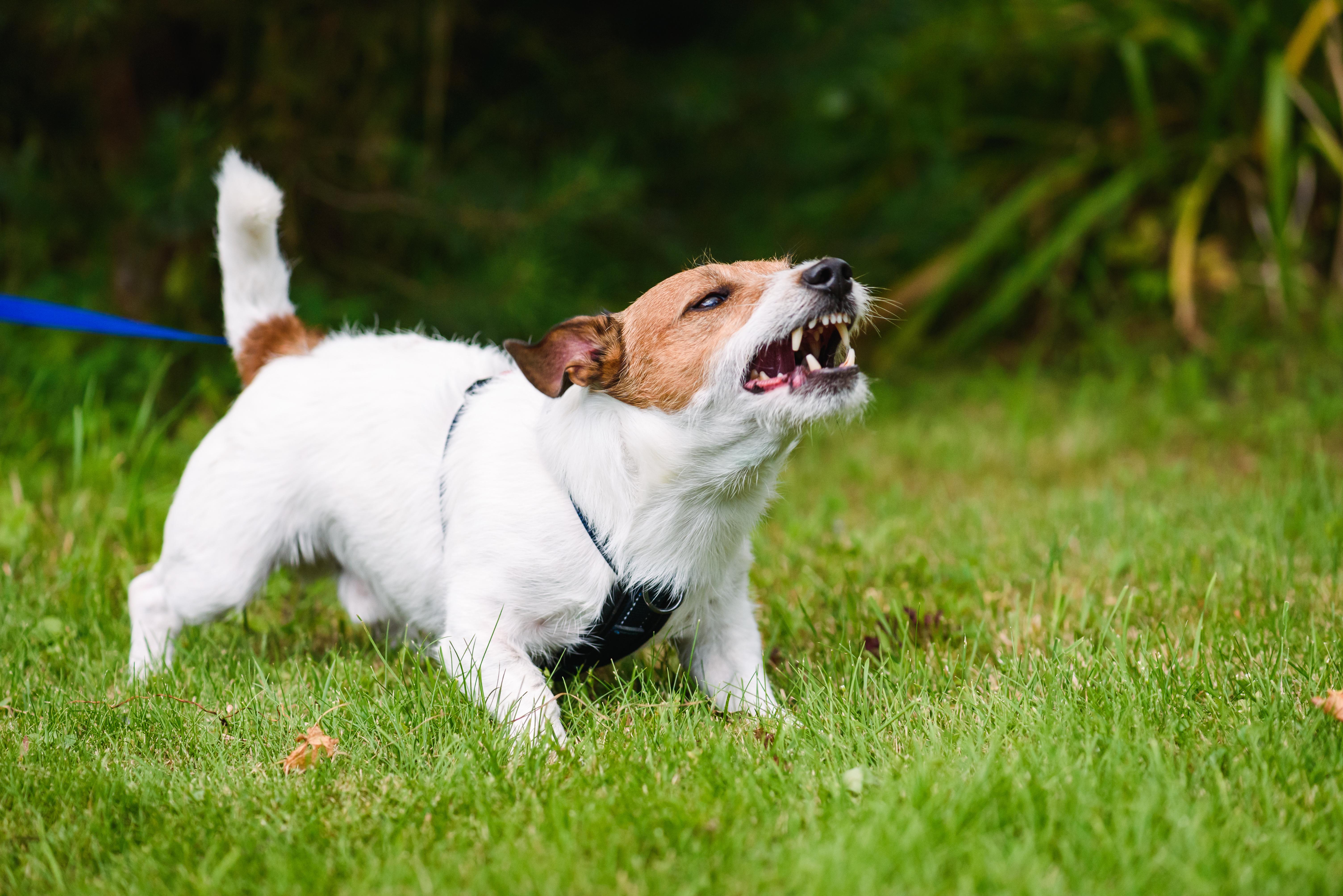 犬だけでなく、人や猫も感染する狂犬病ってどんな病気?感染するとどんな症状がでるの?