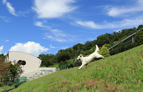 【兵庫県のおすすめおでかけスポット】広いドッグランがあるグランドッグランドで遊ぼう