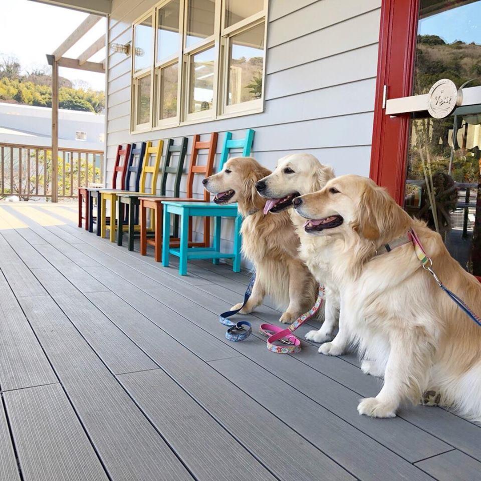 【神奈川県のおすすめおでかけスポット】愛犬とVen!Kitchen&Dog Gardenに行こう
