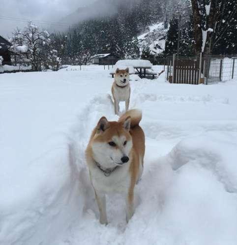 柴犬専用のドッグラン冬