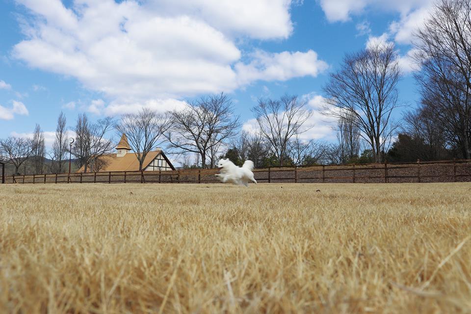 【岡山県のおすすめお出かけスポット】西日本最大級のドッグラン!岡山農業公園ドイツの森で愛犬と観光を楽しもう!