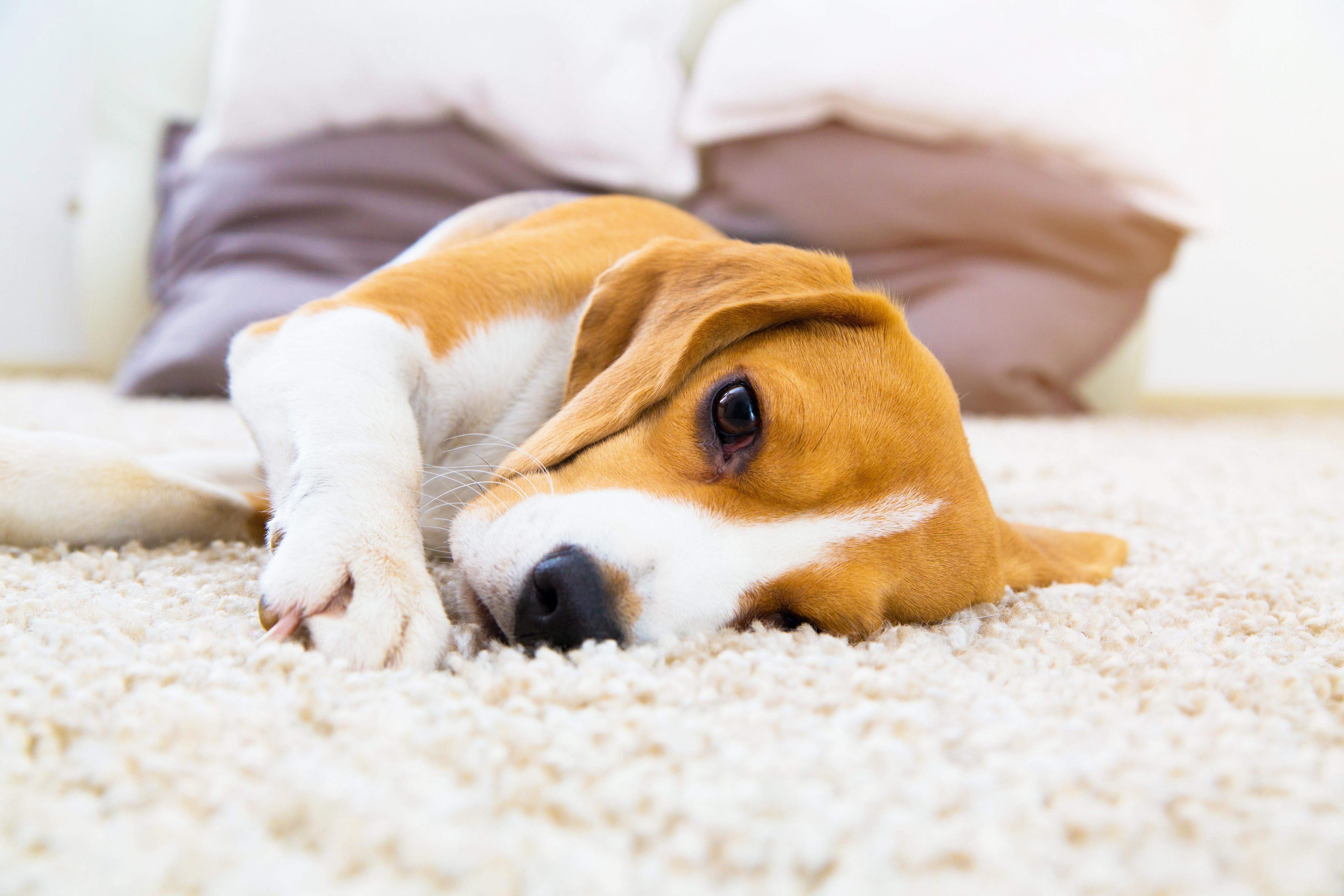 犬にも五月病ってあるの?こんな症状が出た場合は要注意!!!