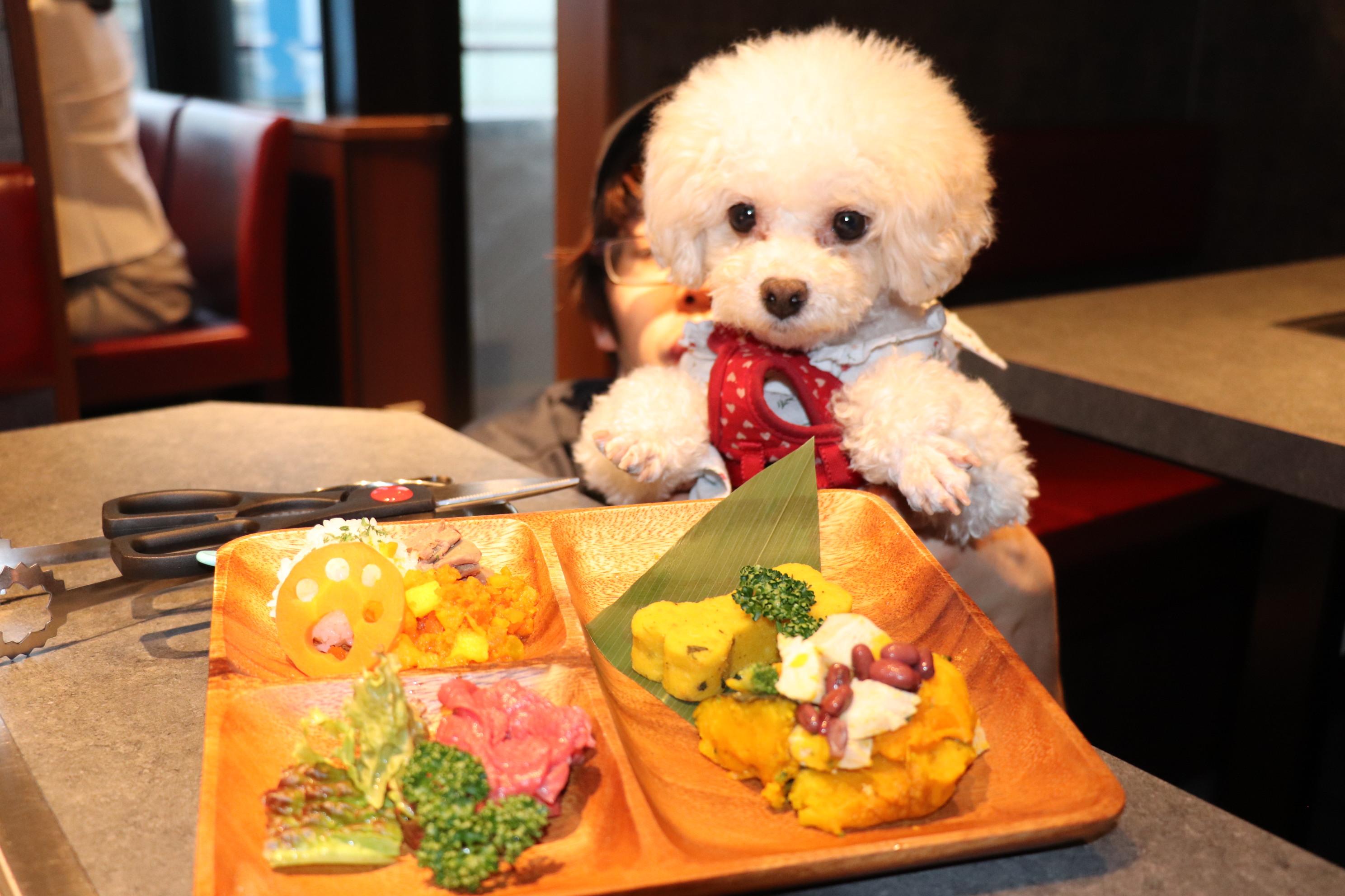 愛犬と一緒に行くことができる焼肉レストラン!本日、牛たんうしすけが吉祥寺にオープン!