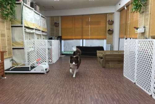 犬の民宿&遊戯場 ワンズワンダー