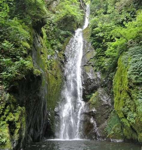 愛犬とのお出かけスポット「 秋川渓谷」大岳山の滝