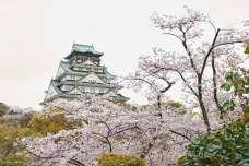 【大阪のおすすめお出かけスポット】愛犬と大阪城公園へ行こう