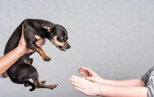 犬に嚙まれたときはどうする?