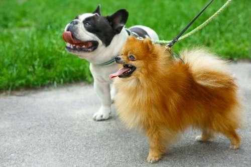 犬とおさんぽ