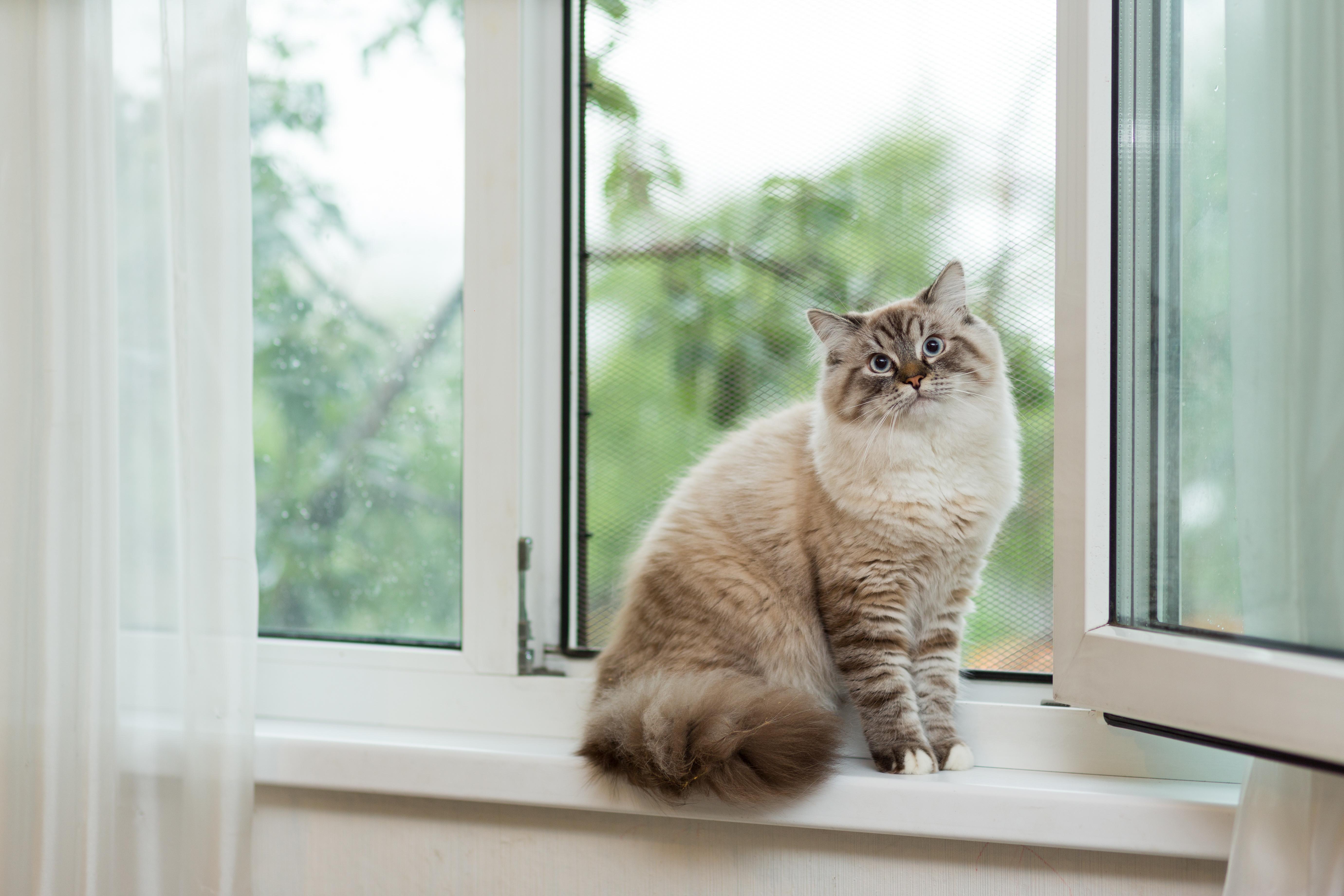 「猫は家につく」といわれるのはなぜ?人にはあまりなつかないの?