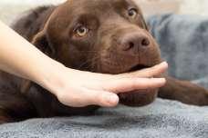 犬に嚙まれた場合はどうするべき?病院は行く?嚙まれたあとの処置もご紹介