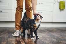 愛猫がスリスリと体をこすりつけてくるのはなぜ?!
