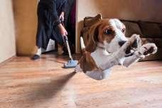 掃除機はどうしてもイヤ!掃除機をみると逃げたり吠えたりする犬の気持ちとは?