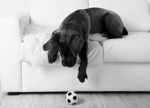 愛犬が「ピーピー」と鳴るおもちゃに夢中になる理由