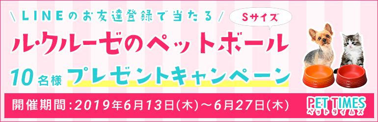 本日終了!LINE登録でル・クルーゼ ペットボール(S)プレゼントキャンペーン!!!