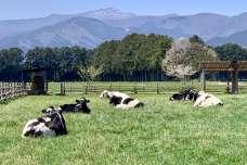 【栃木県のおすすめおでかけスポット】入場無料!愛犬と千本松牧場へ行こう