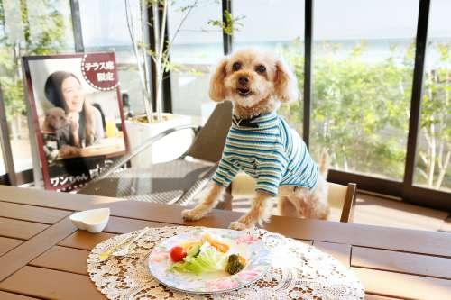 愛犬と一緒にお食事を楽しむ
