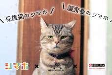 #保護猫のシマホ、#譲渡会のシマホをつけて猫の写真をインスタ投稿すると1投稿あたり5円が猫助けに。