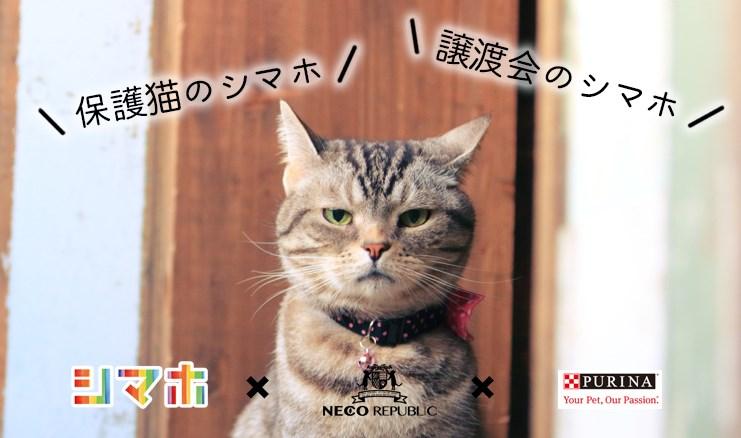 #保護猫のシマホ、#譲渡会のシマホをつけて猫の写真をインスタ投稿すると1投稿あたり5円が猫助けに。シマホxネスレ ピュリナ ペットケア xネコリパの猫助け企画第5弾!誰でもできる猫助け企画参加者募集!
