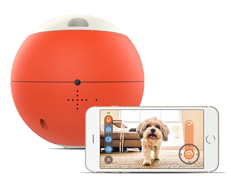 外出先でも大切なペットと一緒。ペットの運動不足を解消できるロボット型おもちゃ easyPlayを自社ECで販売開始