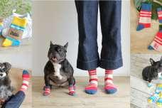 日本初!?犬の靴・靴下専門店「ドックドッグ」から、愛犬とお揃いで履ける人用靴下が新登場!7月24日(水)よりAmazonで販売開始