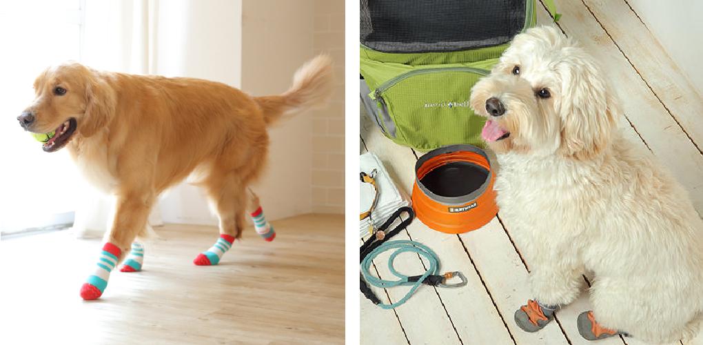 犬に靴下が必要な理由:現代社会に潜む愛犬へのリスク