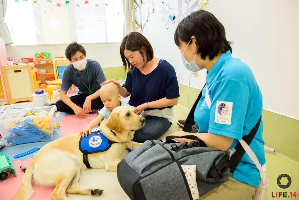 ファシリティドッグの大きな特徴は、毎日同じ病院に勤務し、個々のニーズに合わせた活動を行うこと