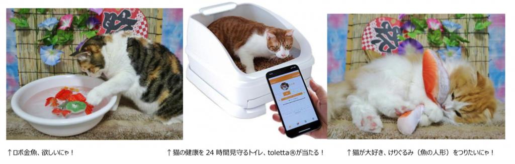 「猫祭り」内容