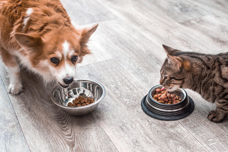 ジメジメとした梅雨や夏のシーズンに急増中!犬と猫の食中毒に要注意!感染ルートとは?