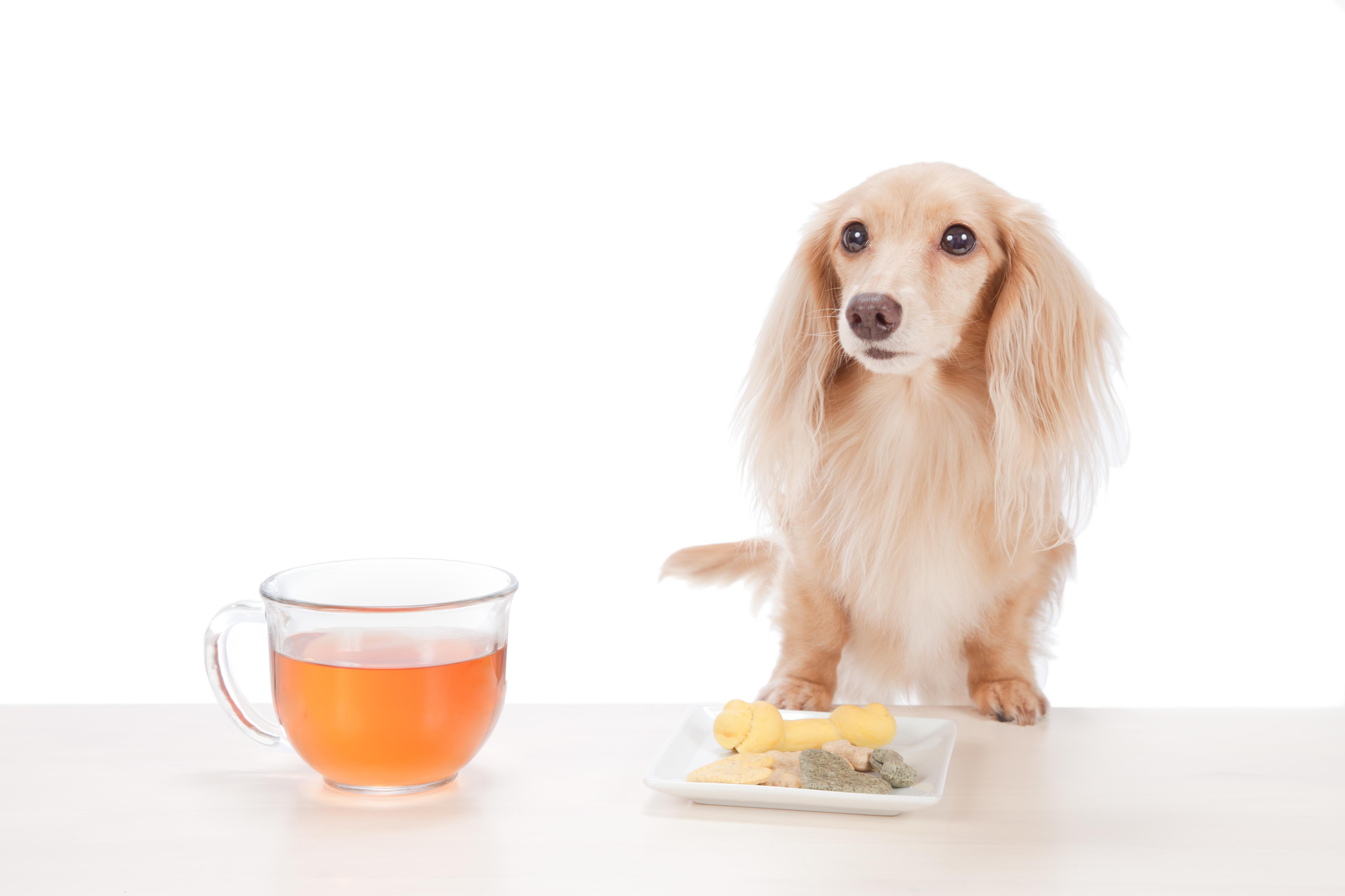 夏の脱水予防!家にあるアレで、愛犬に特製ハーブティーを作ろう!脱水症状の確認方法もご紹介