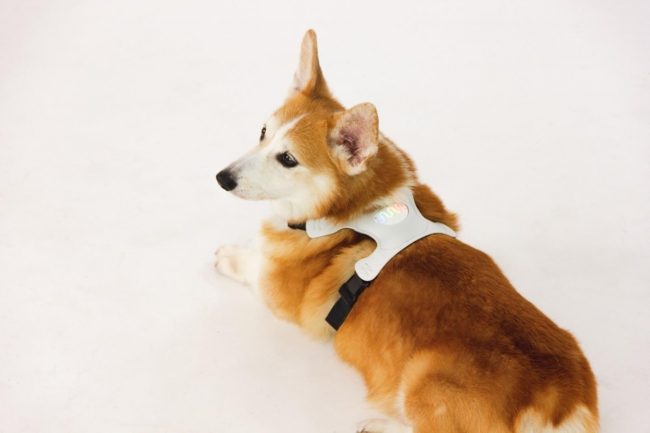 リアルテックファンド、動物との意思疎通を目指す株式会社ラングレスへの出資を実施