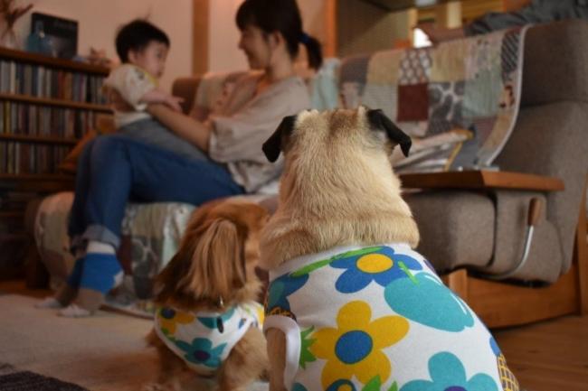 【ペットの花粉症対策に】東大阪の染工場が、1着からのドッグウエア花粉対策加工サービスをスタート