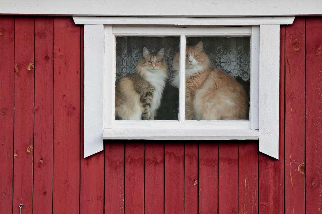 ノルウェージャンフォレストキャットを飼う際のポイント「多頭飼いの場合はテリトリーを確保する」