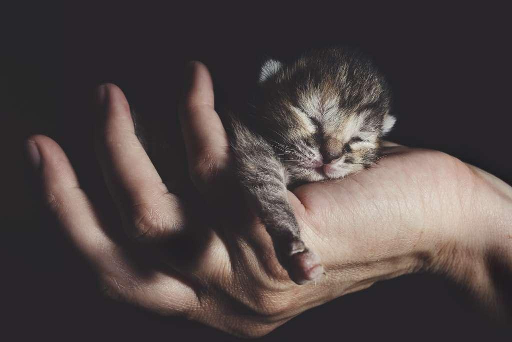 子猫を拾ったらしなければならない9つのこと。責任をもって命を育てるために