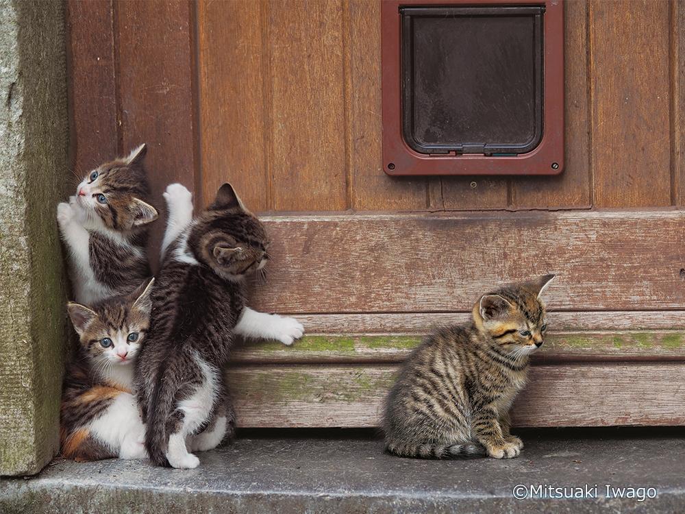 動物写真家 岩合光昭新作写真展「こねこ」が8月2日(金)から美術館「えき」KYOTOにて開催!