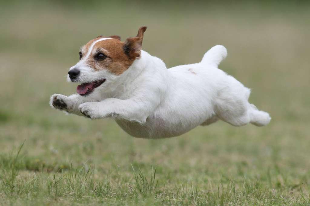 株式会社プリンスホテル:飛行犬写真家 的場信幸氏による飛行犬撮影会を実施