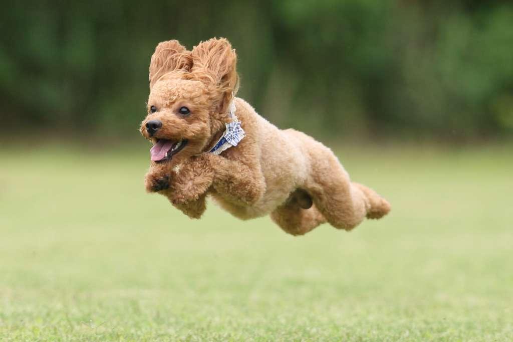 飛行犬 3