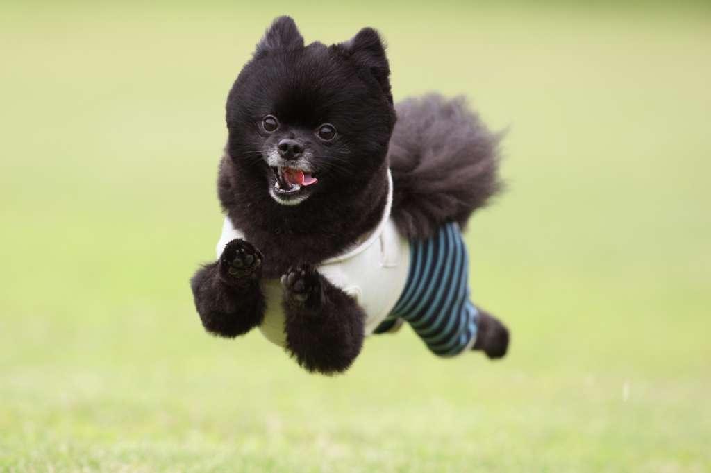 飛行犬 4