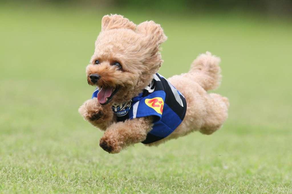 飛行犬 5