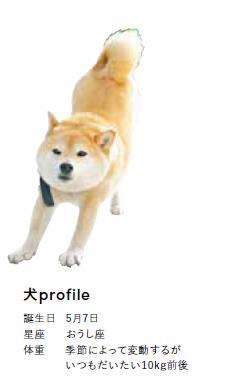 柴犬との日々を写真と文で描く、ESSE onlineの人気連載が書籍化