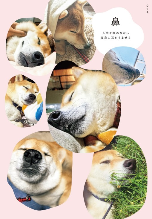 inubot回覧板の柴犬の鼻