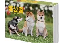 柴犬に癒されること間違いなしの『劇場版 柴公園』DVDが11月2日に発売決定!