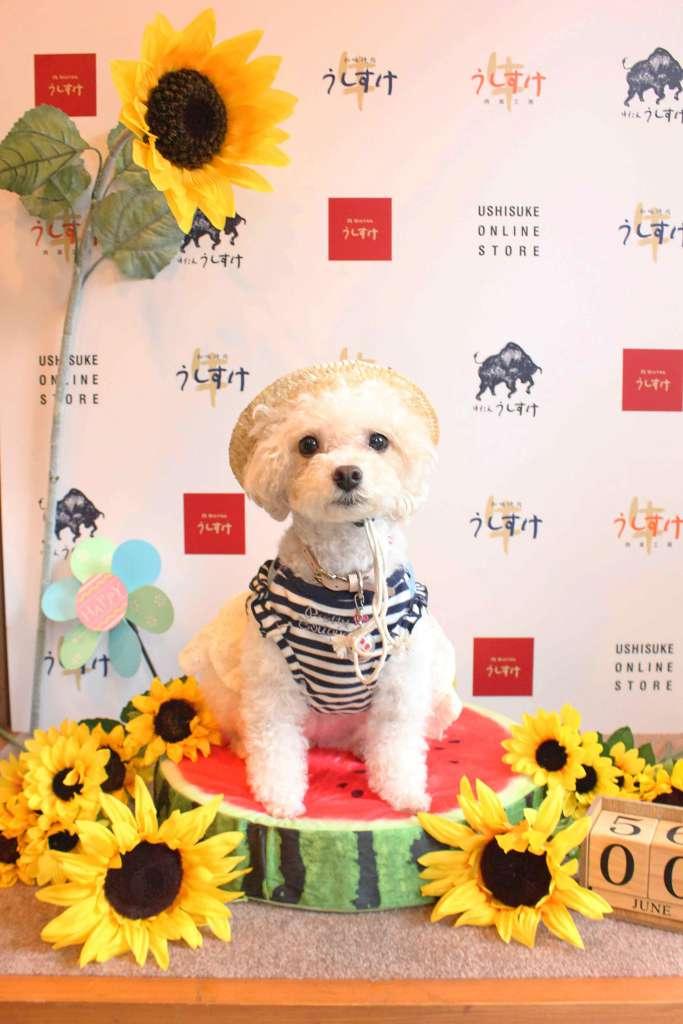 『うしすけ』各店舗でおなじみ愛犬用のフォトブースも設置