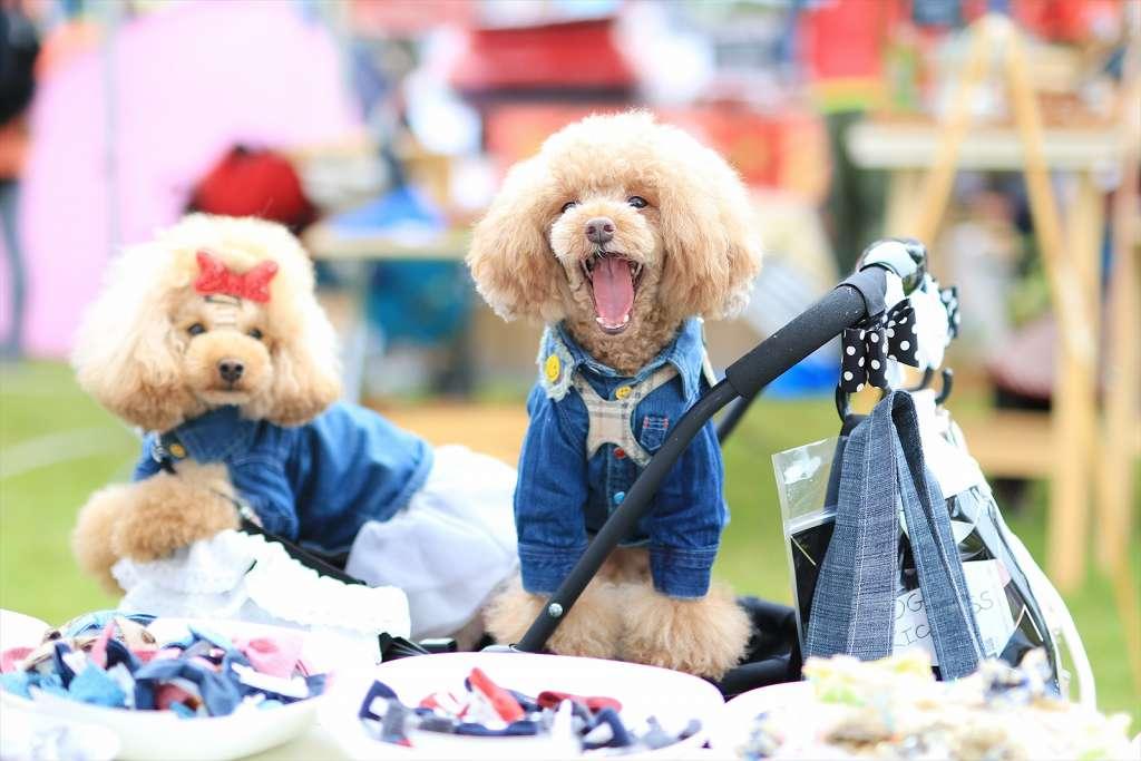 『みちのく公園ドッグフェスティバル』ドッググッズマーケットの様子