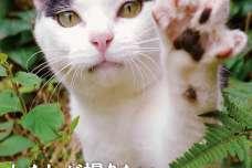 株式会社主婦の友インフォス:約20か国およそ42都市で巡り合った140匹以上の猫たち!8/2発売!